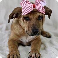Adopt A Pet :: Bonnie - Picayune, MS