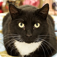 Adopt A Pet :: Neuman - Great Falls, MT