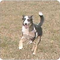 Adopt A Pet :: Noel - Katy, TX