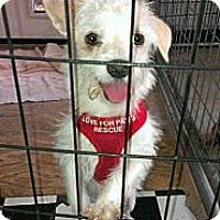 Adopt A Pet :: Eddie - Spring Branch, TX