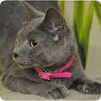 Adopt A Pet :: Claudia - Arlington, VA
