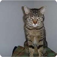 Adopt A Pet :: Macy - Hamburg, NY