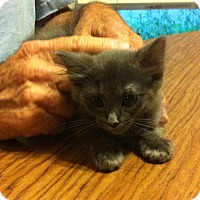 Adopt A Pet :: Miney - Weatherford, TX