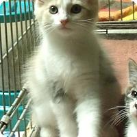 Adopt A Pet :: BLANCA - Acme, PA