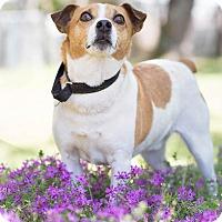 Adopt A Pet :: Skeety - Conyers, GA
