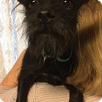 Adopt A Pet :: Happy - Kansas city, MO