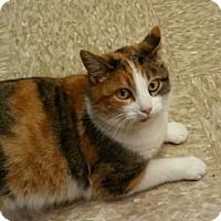 Adopt A Pet :: Mrs. Claus - Medina, OH