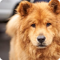 Adopt A Pet :: Princess - North Haven, CT