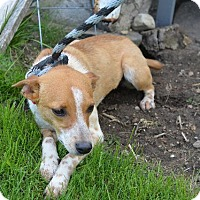 Adopt A Pet :: Meli - Danbury, CT