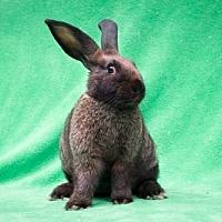 Adopt A Pet :: Leia - Baton Rouge, LA