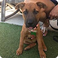 Adopt A Pet :: Hannah - San Diego, CA