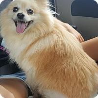 Adopt A Pet :: Megara - Alpharetta, GA