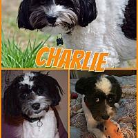 Adopt A Pet :: Charlie - Edmonton, AB