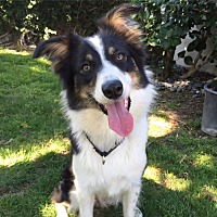 Adopt A Pet :: WILLOW (Courtesy List) - San Pedro, CA