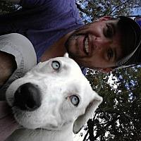 Adopt A Pet :: Blossum - Olympia, WA