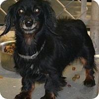Adopt A Pet :: Sassy - Athens, GA