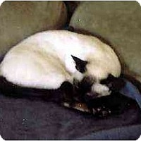 Adopt A Pet :: Mickey & Sylvester - Clementon, NJ