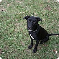 Adopt A Pet :: charlie - Morriston, FL