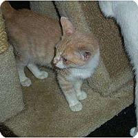 Adopt A Pet :: Tarzen - Mobile, AL