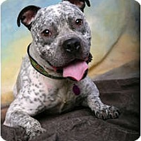 Adopt A Pet :: Romeo - Cleveland, OH