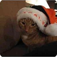 Adopt A Pet :: Morris - Cincinnati, OH