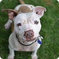 Adopt A Pet :: Georgia - Los Angeles, CA