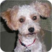 Adopt A Pet :: Maggie Rose - La Costa, CA