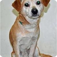 Adopt A Pet :: Bito - Port Washington, NY