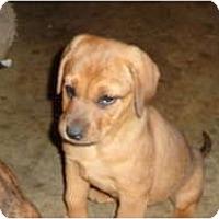 Adopt A Pet :: Sashi - Eden, NC