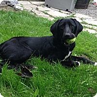 Adopt A Pet :: Tyson - Hamilton, ON