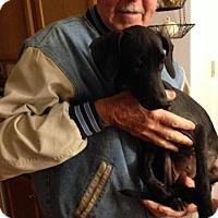 Adopt A Pet :: Fifi - Brick, NJ