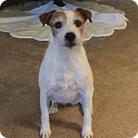 Adopt A Pet :: Bailey In Houston PENDING - Houston, TX