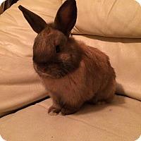 Adopt A Pet :: Buttercup and Peanut - Williston, FL