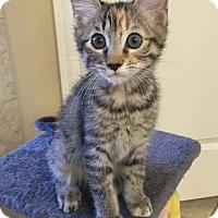 Adopt A Pet :: Alexis - Dallas, TX