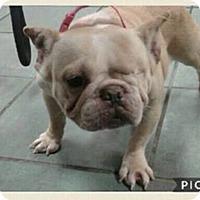 Adopt A Pet :: Gertie - Columbus, OH