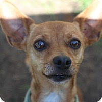 Adopt A Pet :: Darwin - Kempner, TX