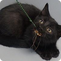 Adopt A Pet :: Ziggy - Seguin, TX