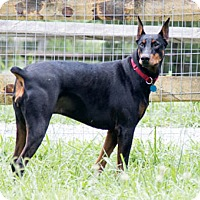 Adopt A Pet :: AKERRA - Greensboro, NC
