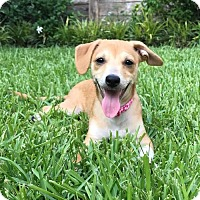 Adopt A Pet :: Venus - Houston, TX