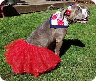 American Bulldog/American Pit Bull Terrier Mix Dog for adoption in Portland, Oregon - Rosie