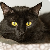 Adopt A Pet :: Jabbar - Warwick, NY