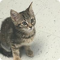 Adopt A Pet :: Jenny - Covington, KY