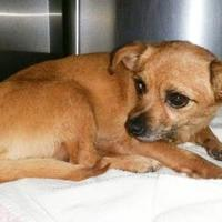 Adopt A Pet :: Maddox - Tulsa, OK