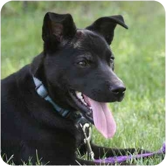 Labrador Retriever Mix Puppy for adoption in Avon, New York - Reba