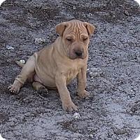 Adopt A Pet :: Adopted - ....., FL