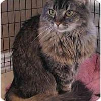 Adopt A Pet :: Jade - Davis, CA