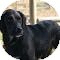 Adopt A Pet :: Justice - Denver, CO