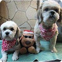 Adopt A Pet :: Treasure - Crofton, MD