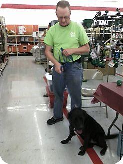 Labrador Retriever/Boxer Mix Dog for adoption in Florence, Alabama - Belle