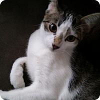 Adopt A Pet :: Darwin - St. Louis, MO